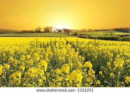 Rise and Shine. Stunning Sunrise over Farm and Yellow Crop Field in Northumberland, England - stock photo