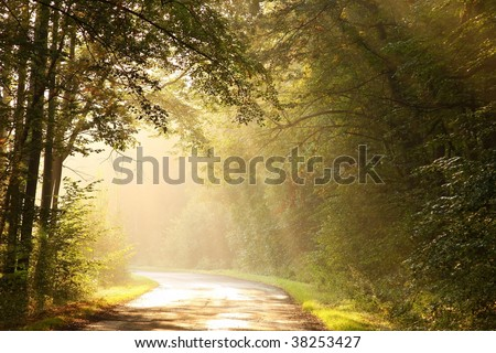 Rising sun falls into the misty forest way in the warm colors of autumn. - stock photo