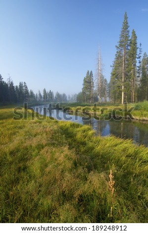 River and forest in Yellowstone National Park, United States