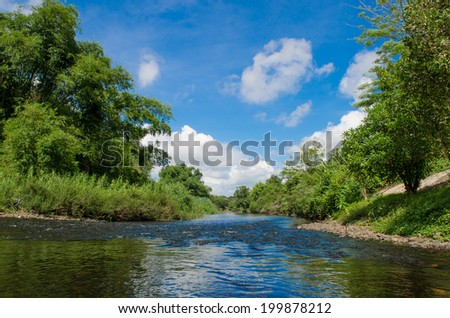 River and spring forest - stock photo