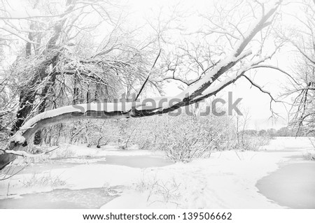 river and trees in winter season. Nature composition.
