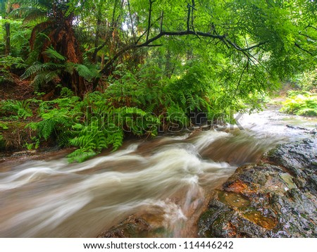 River between trees in rain forest in New Zealand - stock photo