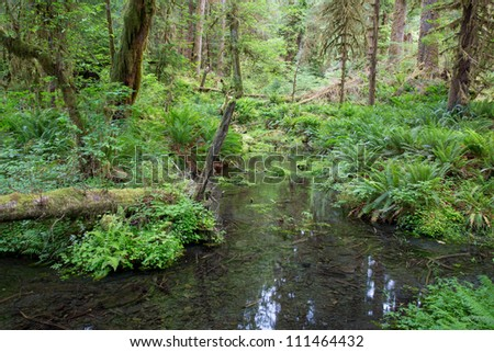 River beween trees in largest rain forest in the western hemisphere, in Olympic National Park, Washington, USA - stock photo