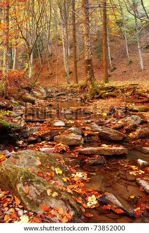 river colored by fallen leaves - stock photo