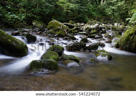 River flow in the forest