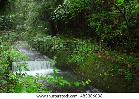 River flowing in a forest