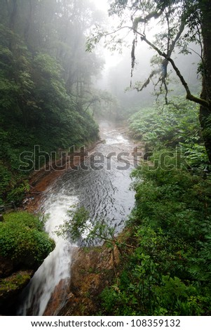 River in a misty and lush forest in Sapa, Vietnam