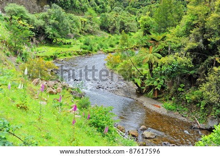 River in Te Urewera National Park, New Zealand - stock photo