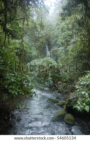 river in the jungle of costa rica - stock photo