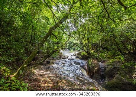 River in the jungle of Panama, El Valle de Anton - stock photo