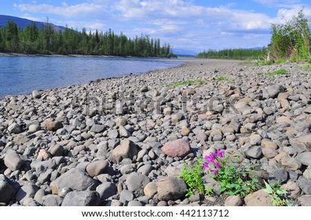 River Muksun, the Putorana plateau. Summer water landscape in Taimyr, Siberia, Russia. - stock photo