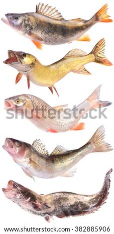 River predators - stock photo