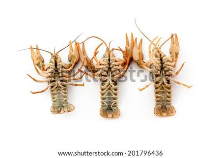 River raw crayfishes closeup on white background - stock photo