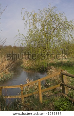 River scene with wooden fence & willow tree