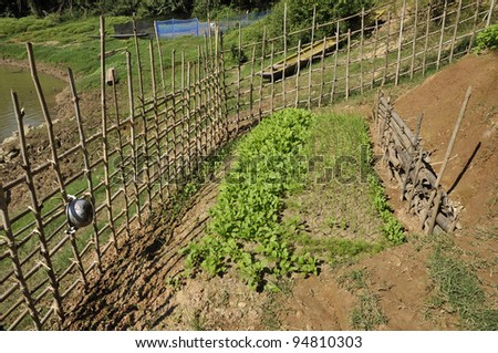 River Thailand Canal Vegetable Farm - stock photo