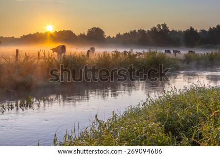 River the Dinkel in Twente on an early summer morning with haze over the countryside with cows in the Netherlands - stock photo