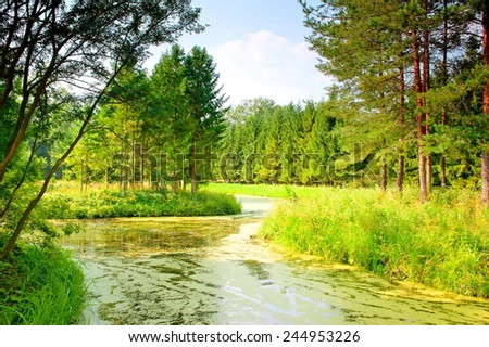 river with mud flows in the coniferous forest - stock photo
