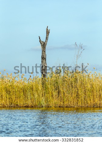 River with reed and dead tree which reflected in the Delta of the Volga River, Russia - stock photo