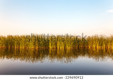 River with reed reflected in the water in Friesland, The Netherlands - stock photo