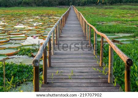 River with Victoria Regias and footbridge in Brazilian Panantal wetlands - stock photo