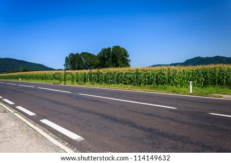 Road along corn field on sunny summer day, Austria