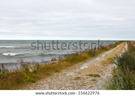 Road along the seaside. Nordic nature of Gotland, Sweden. - stock photo