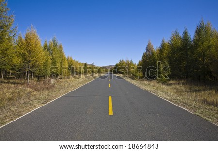 road along with trees in the north of China - stock photo