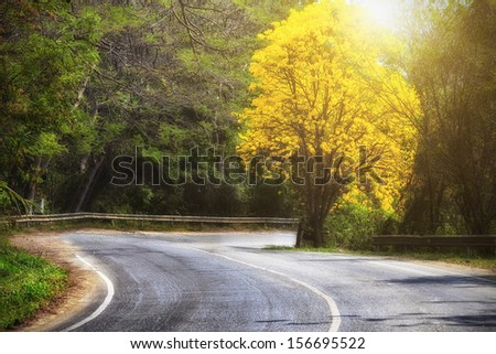 Road and golden tree