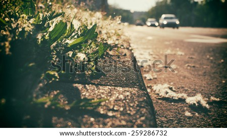 Road and pavement in summer sunset light, covered in poplar seeds. Car are seen in a distance, out of focus. - stock photo