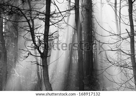 Road and sunbeams in strong fog in the forest, Poland.  - stock photo