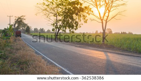 road and tree in local city Thailand.