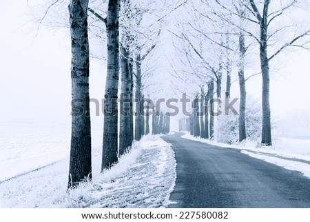 road and  trees covered with snow in wintertime  - stock photo