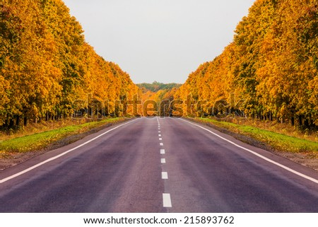 road at autumn with alley of yellow trees - stock photo