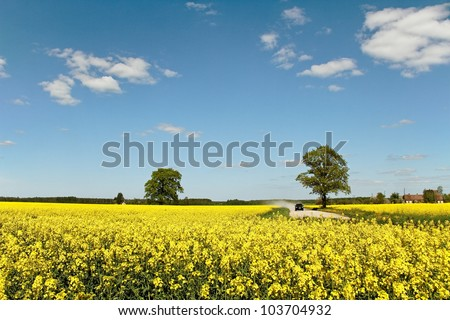 Road between canola fields  in a sunny day. - stock photo