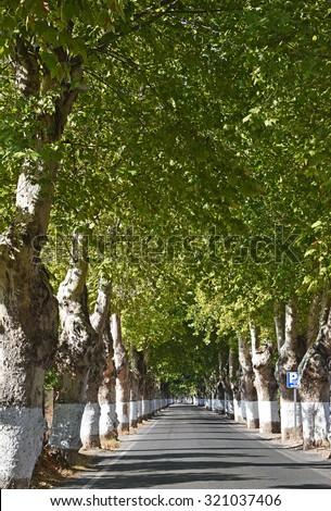 Road between green trees  - stock photo