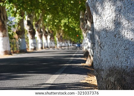 Road between green trees (selective focus) - stock photo