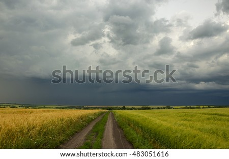 Road between the wheat and rye fields.