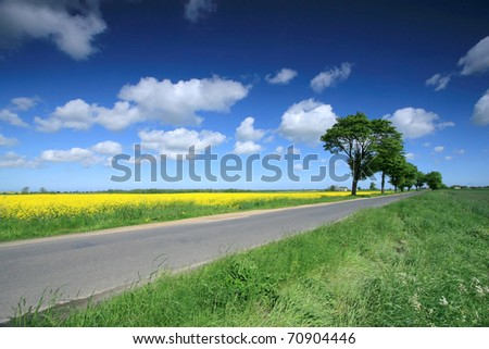 Road close to rapeseed field