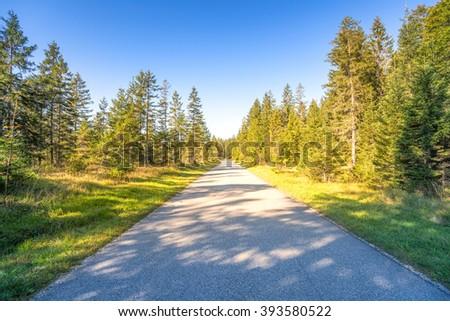 Road, Forrest, Bavaria  - stock photo