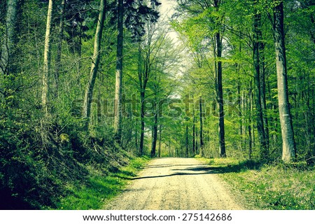 Road in a beech forest in the springtime - stock photo