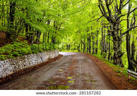 Road in a forest after rain
