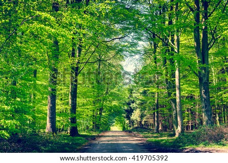 Road in a green beech forest in the spring - stock photo