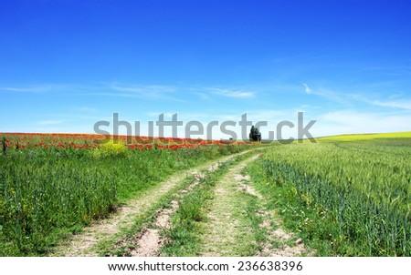 Road in Alentejo field  at Spring time  - stock photo