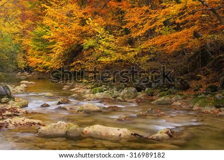 Road in autumn forest. Autumn landscape - stock photo