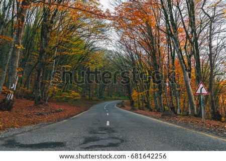 Road in autumn forest, road sign - turn