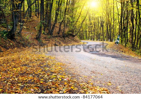 Road in autumn wood. Nature composition. - stock photo