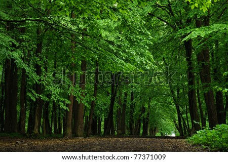 Road in beech forest in the evening - stock photo
