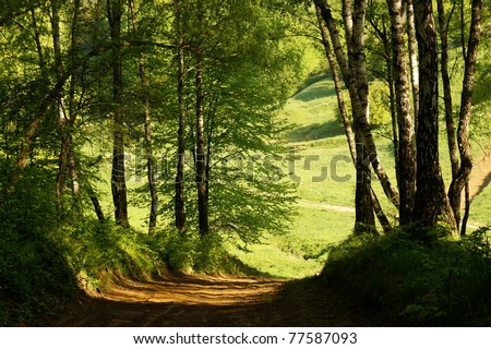 Road in birch forest - stock photo