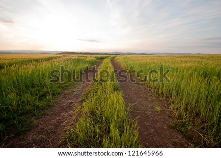 Road in field over sunset - stock photo