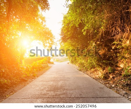 Road in forest at sunset. - stock photo